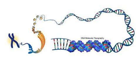 Human Genome Project Essay Example Graduateway